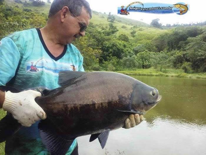 pescaria-barra-alegre017