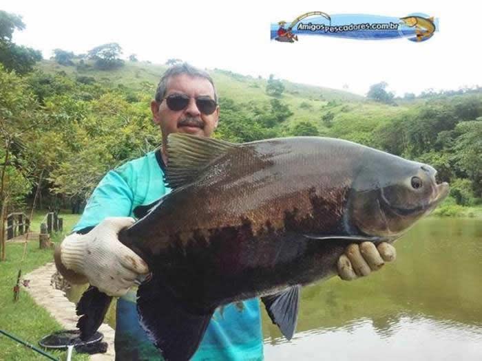 pescaria-barra-alegre019