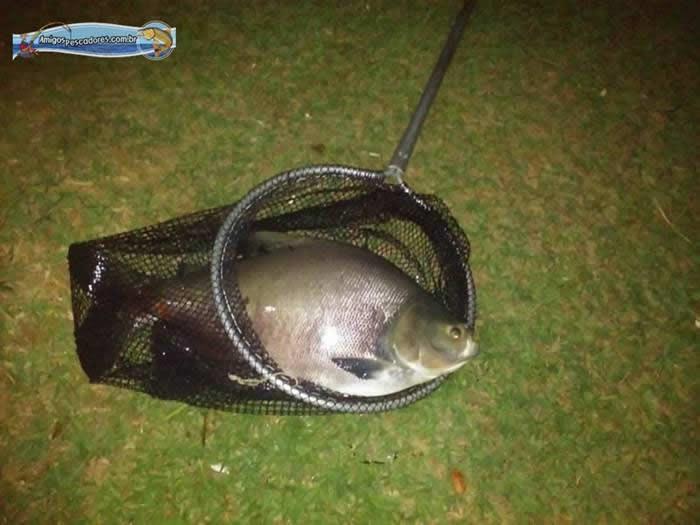 pescaria-barra-alegre049