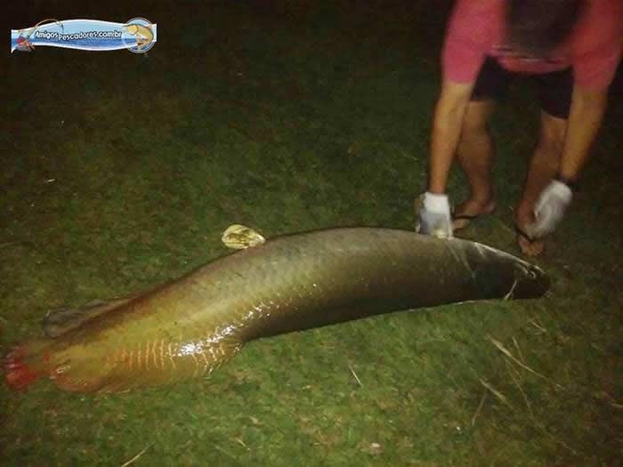 pescaria-barra-alegre051