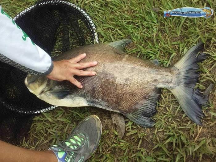pescaria-barra-alegre061
