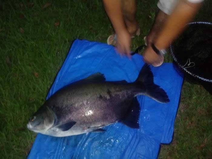 pescaria-barra-alegre089