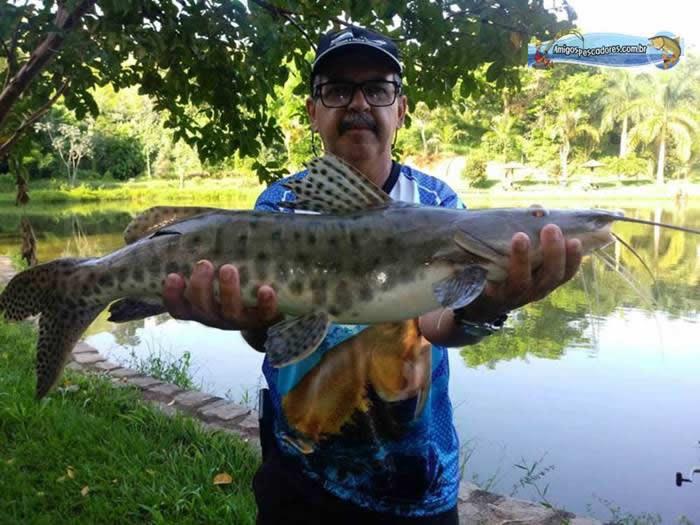 pescaria-barra-alegre126