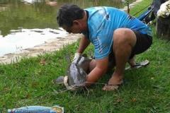 pescaria-barra-alegre015