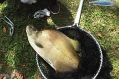 pescaria-barra-alegre027