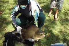 pescaria-barra-alegre033