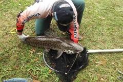 pescaria-barra-alegre038