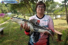 pescaria-barra-alegre102