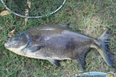 pescaria-retiro-das-lages-035