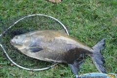 pescaria-retiro-das-lages-040