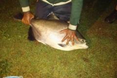 varandao-pesque-pague041