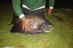 varandao-pesque-pague044