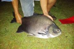 varandao-pesque-pague049