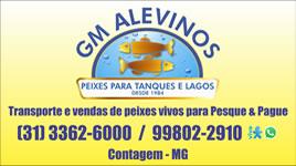 gm-alevinos-p